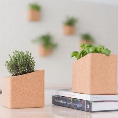 Grow Block Manjericão e Coentros