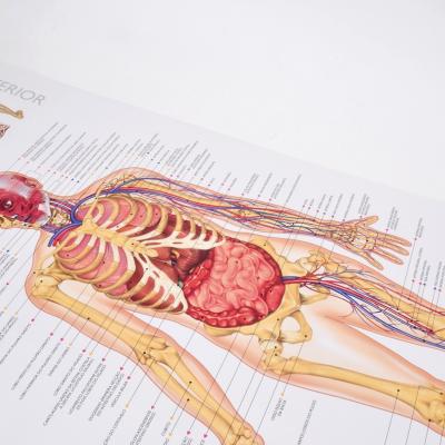 Descobre o corpo humano