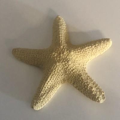 Estrela do Mar em gesso perfumado e/ou Vela