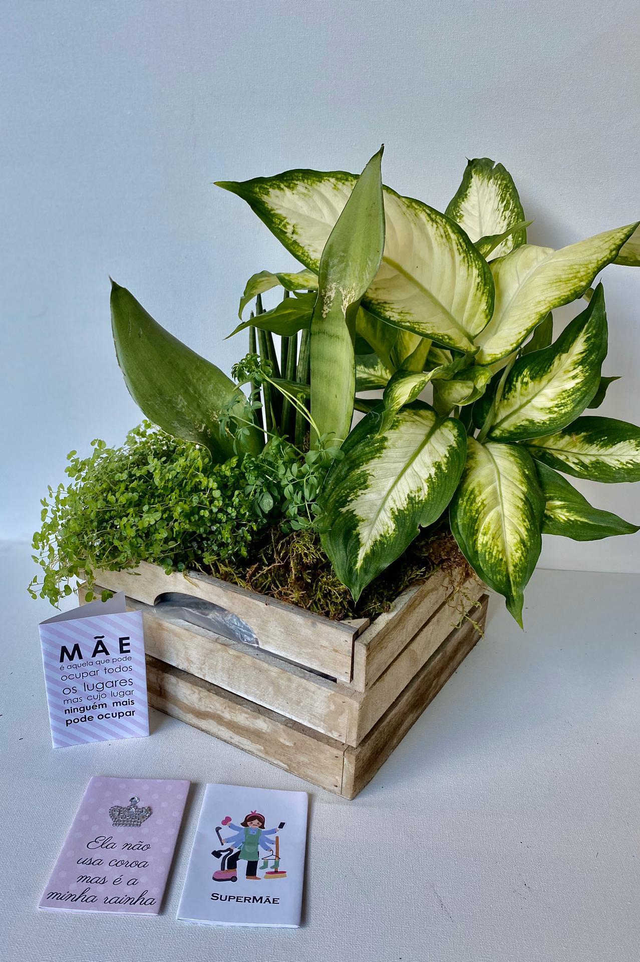 Caixa de Plantas