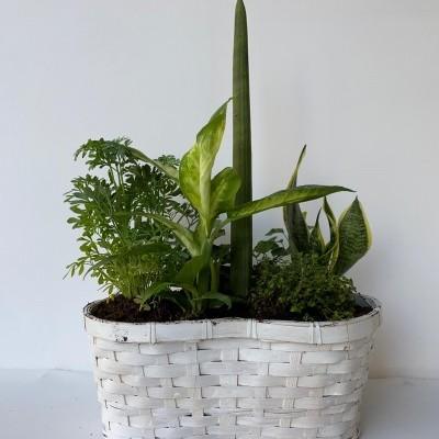 Jardim em Vaso Clássico