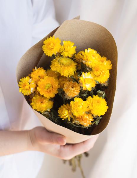 Helichrysum amarelo