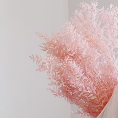 Ruscus cor-de-rosa