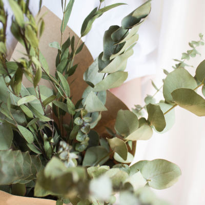 Eucalyptus variados