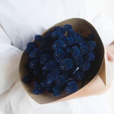 Phalaris azul