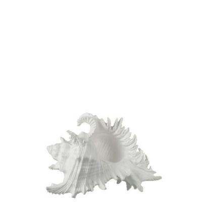 Búzio Branco