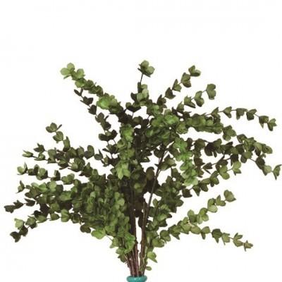 Rama Folhas Verdes