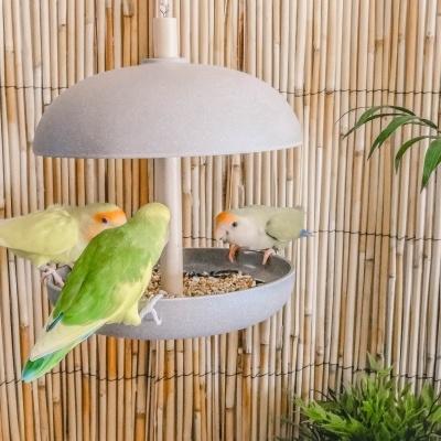 Comedouro Pássaros Feather