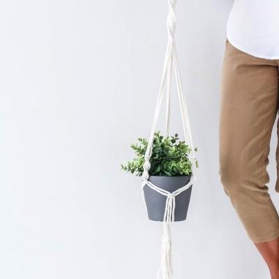 Plant Hanger Dracaena
