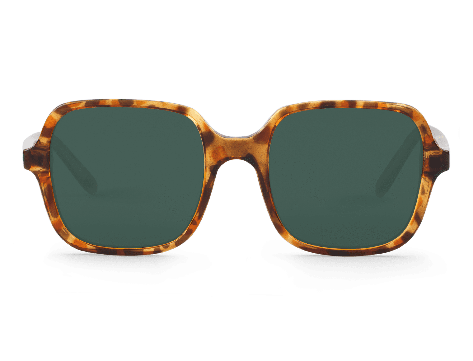 BELLEVILLE | CHEETAH TORTOISE with classical lenses