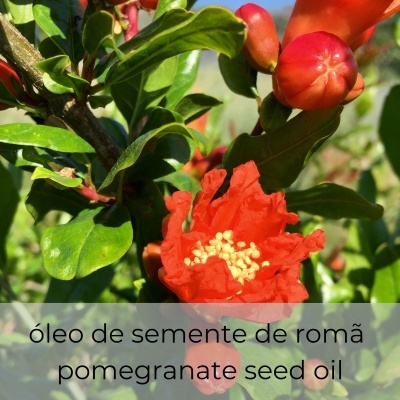 Óleo vegetal Punica granatum 30 mL
