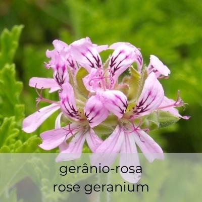 Hidrosol Pelargonium graveolens 100 mL spray