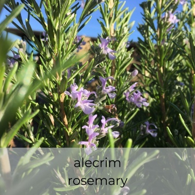 Óleo essencial Rosmarinus officinalis 5 mL