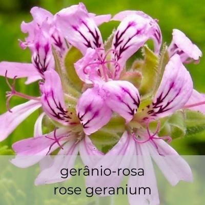Hidrosol Pelargonium graveolens 1Litro