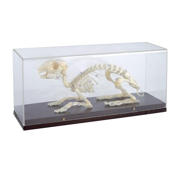 Esqueleto Animal Com Tampa Protetora - Coelho