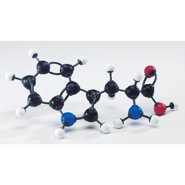 Modelo Moleculares De Aminoácidos
