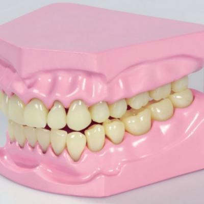 Dentadura Articulada