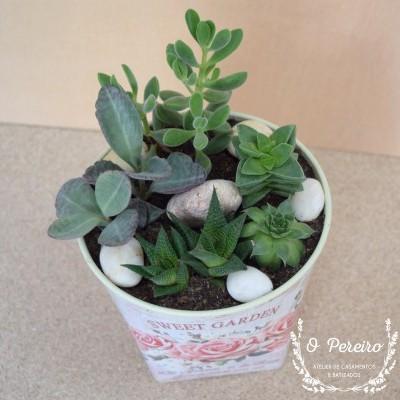 Vaso plástico florido médio c/ 6 suculentas