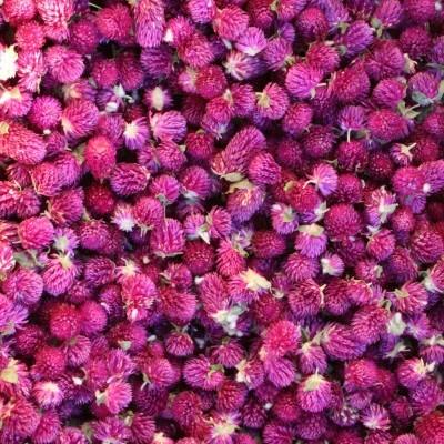 Plantas Aromáticas e Medicinais - Infusões, Tisanas e Blends (venda a granel)