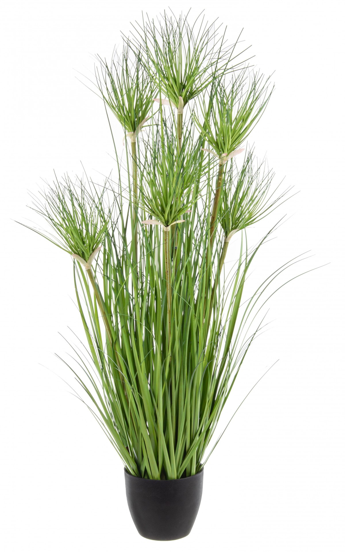 Planta do Deserto- Papiro 90cm