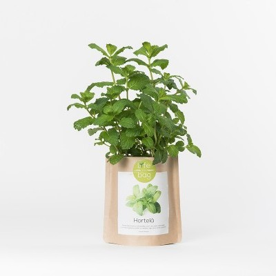 Grow Bag Hortelã | Life in a bag