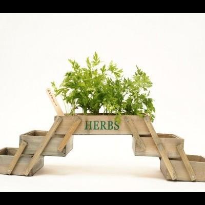 Mini Horta - Terra e Sementes incluídas