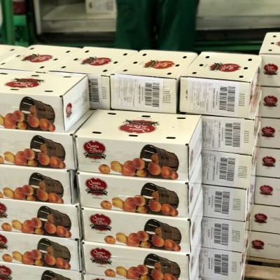 Caixa de Pêssegos Rosas (10 Kg) - 24h