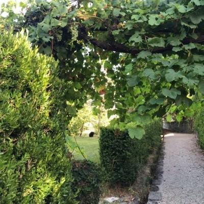 Caixa de Uvas