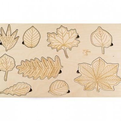 Folhas [madeira]
