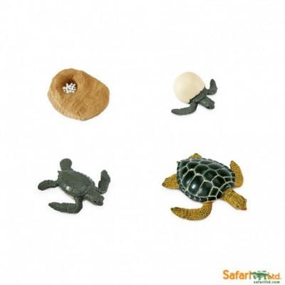 Ciclo de Vida - Tartaruga