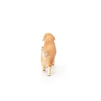 Golden Retriever, fêmea