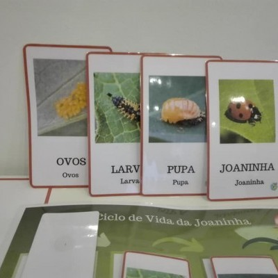 "Kit ""Ciclo de Vida da Joaninha"" [com figuras Safari]"