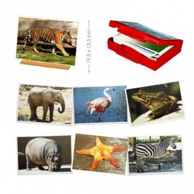 50 fotografias de animais