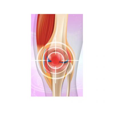 Ossos - Músculos - Articulações