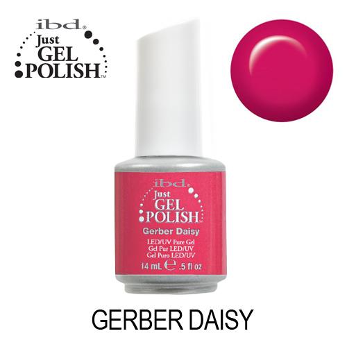 IBD 56515 – Gerber Daisy
