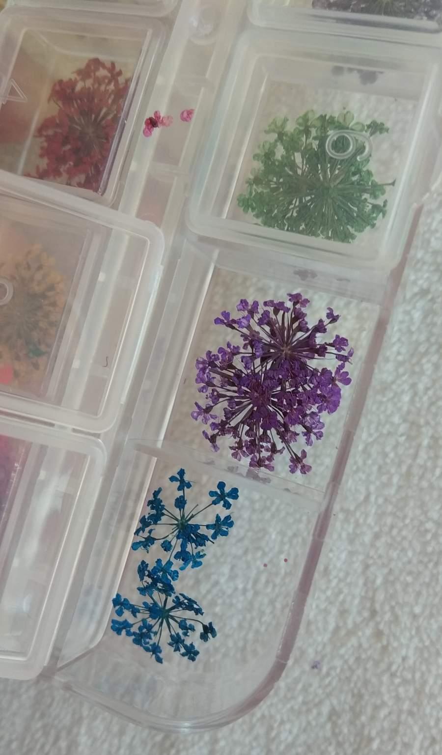 Flores Secas - 12 Unidades em Caixa