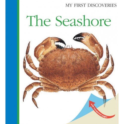 THE SEASHORE: My First Discoveries