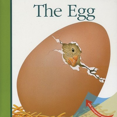 THE EGG: My First Discoveries