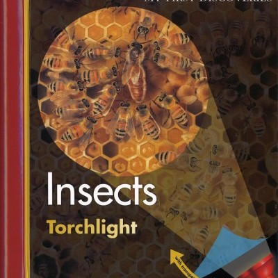Insects: My First Discoveries Torchlight
