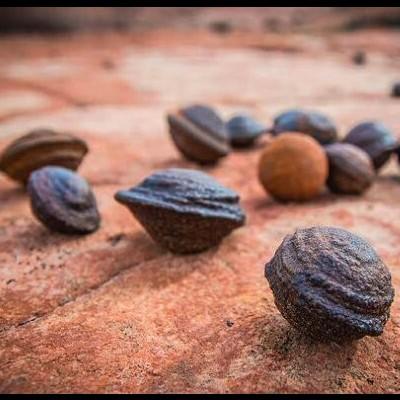 Pedras Moki (Par)