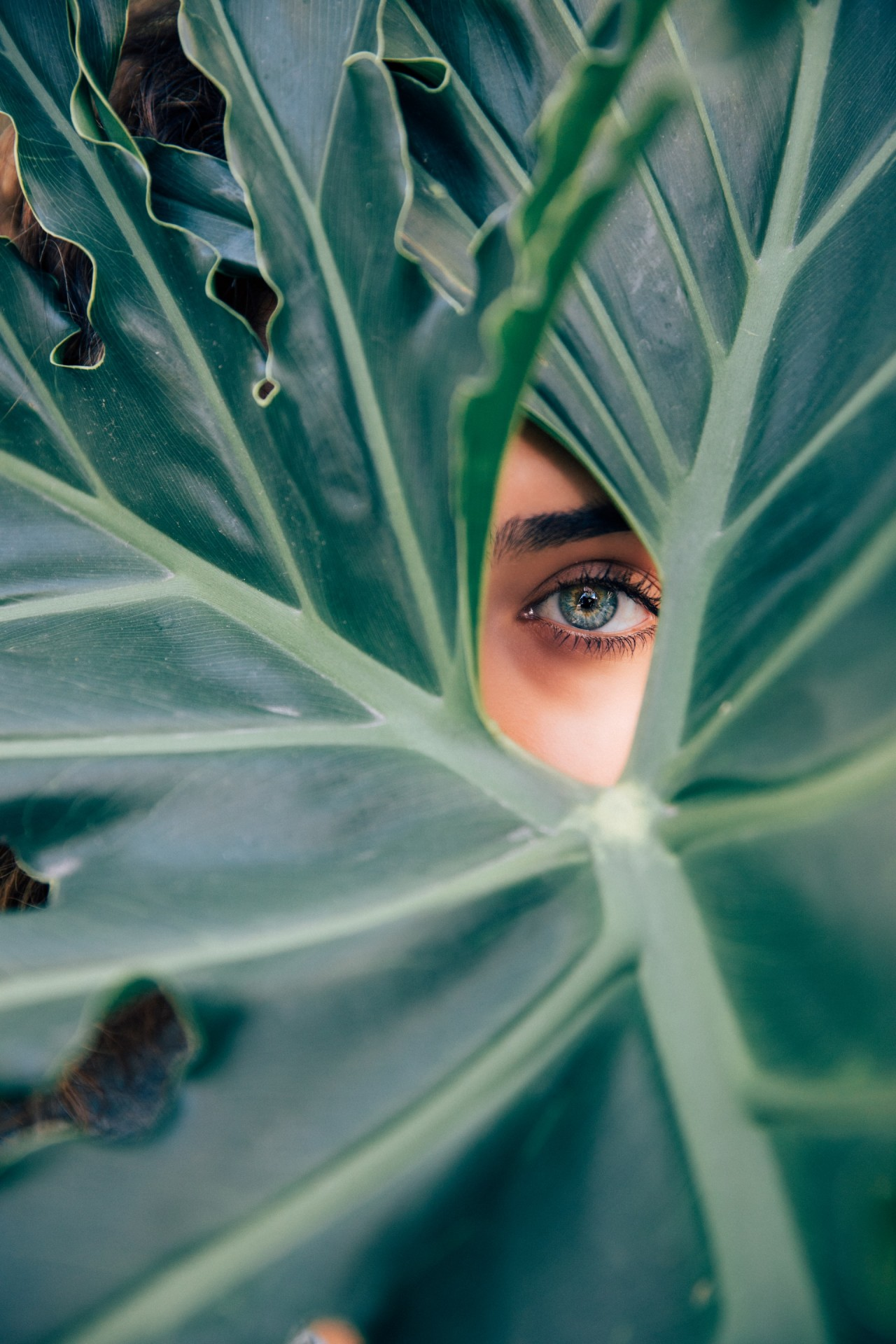 Vegan Bio Nutri Holística