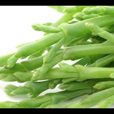 Sal vegetal - Salicórnia  - Samphire Salt