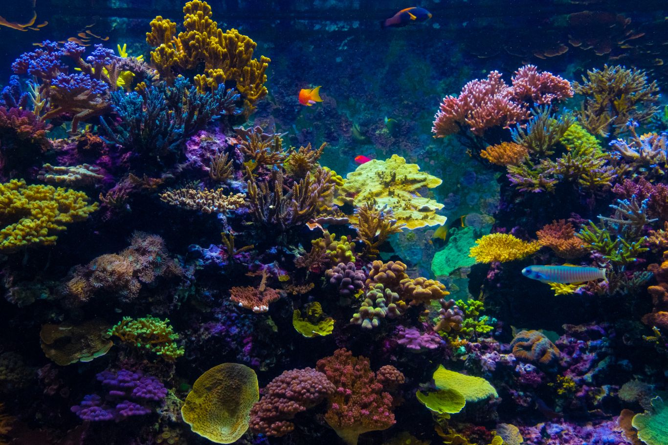 W2R - Window To The Reef