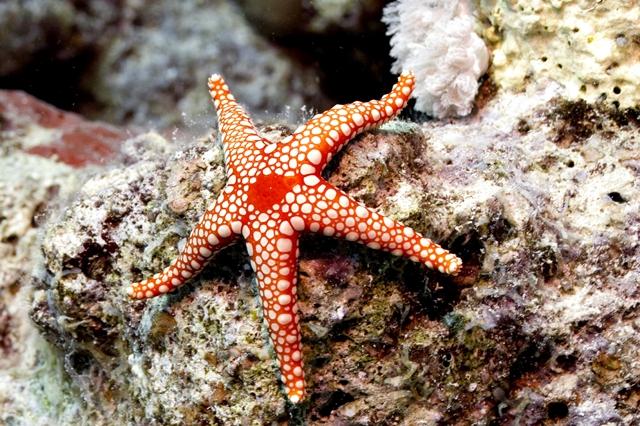 Estrelas/Pepinos